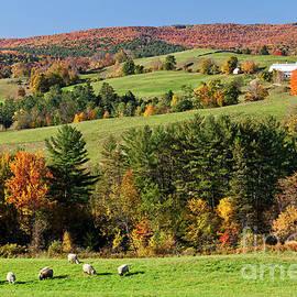 Alan L Graham - New England Idyllic Autumn