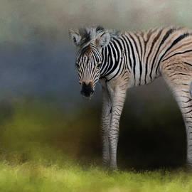 Jai Johnson - New Life 2 Baby Zebra Wildlife Art by Jai Johnson