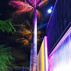 Carlos Alkmin - Night colors - palm tree and modern architecture