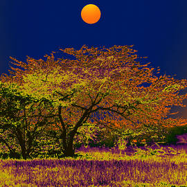 Bliss Of Art - Night Trees and the Full Moon