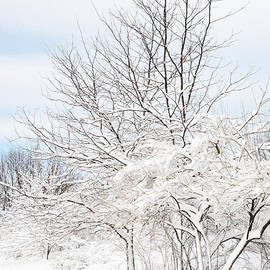 Regina Geoghan - NJ Meadowlands Snowbound