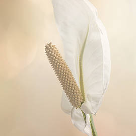 Patti Deters - Peace Lily 2.1