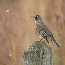 Patti Deters - Robin on Fence Post