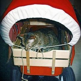 Phyllis Kaltenbach - Nobody Rides in this Wagon but me