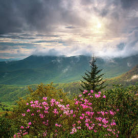 Dave Allen - North Carolina Spring Flowers Blue Ridge Parkway Scenic Landscape Asheville NC