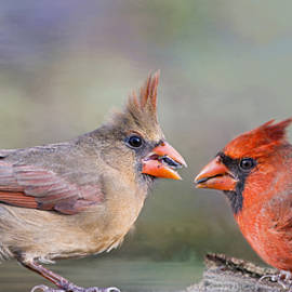 Bonnie Barry - Northern Cardinal Mates for Life