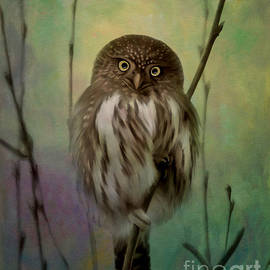 Reflective Moment Photography And Digital Art Images - Northern Pygmy Owl