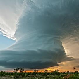 Colt Forney - Northfield, Texas