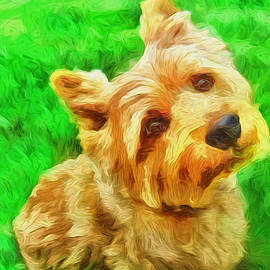 Laurence Canter - Norwich Terrier
