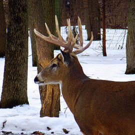 Wild Thing - NOT a 30 Point Buck