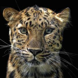 Joachim G Pinkawa - Not A Toy Cat