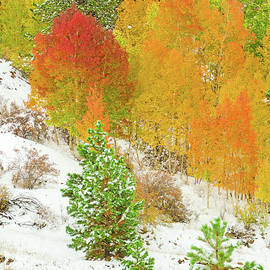 Bijan Pirnia - Not Just Fauve But Colorado Fauve