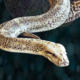 Linda Troski - Not Shy Snake