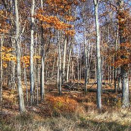 Betsy Zimmerli - November Forest