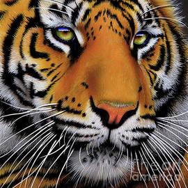 Jurek Zamoyski - November Tiger