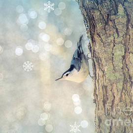 Rima Biswas - Nuthatch Season