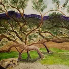 M Carlen - Oaks in the Canyon - Pence Ranch
