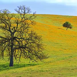Kathy Yates - Oaks on Golden Hill