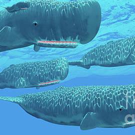 Ocean Sperm Whales