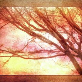 Terry Davis - Ode to Autumn
