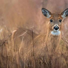 Robin-Lee Vieira - Oh Deer