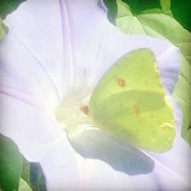 Krysta Hess - Butterfly visit