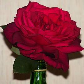 Oklahoma Red Rose