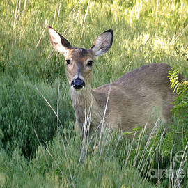 Nava Thompson - Oklahoma Whitetail Deer