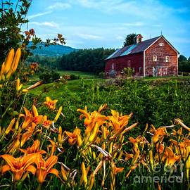 James Aiken - Old Barn and Daylilies in Vermont