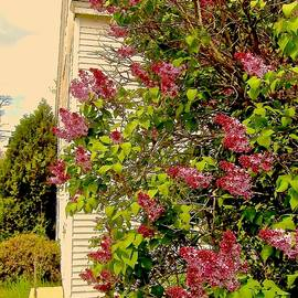 Elizabeth Tillar - Old Barn with Lilacs
