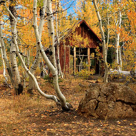James Eddy - Old Cabin In The Aspens