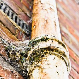 Old drain pipe - Tom Gowanlock