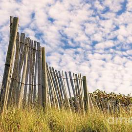 Sasha Samardzija - Old fence
