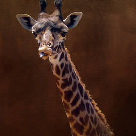 Carla Parris - Old Funny Face Giraffe