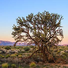 Bonnie Follett - Old Growth Cholla Cactus view 2