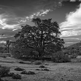 Sandra Selle Rodriguez - Old Pine Nut Tree