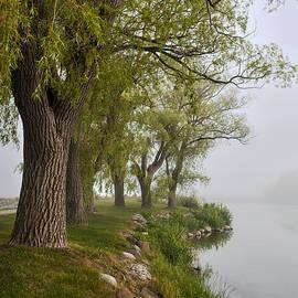 Elena Elisseeva - Old trees on foggy shore