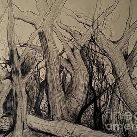 Maja Sokolowska - Old woods