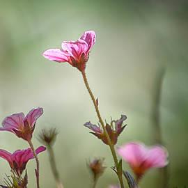 Sharon Lisa Clarke - Olive and pink