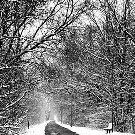 Karen  Majkrzak - On a Snowy Morning in Spring