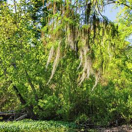 Steve Harrington - On The Bayou - Spanish Moss