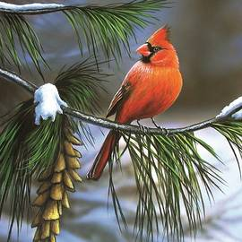 Anthony J Padgett - On Watch - Cardinal