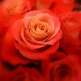 Bonita Brandt - One Dozen Red Roses