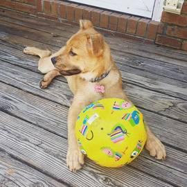 Krysta Hess - One Happy Pup Sprinkler And Beat Up