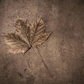 One Leaf December 1st  - Scott Norris