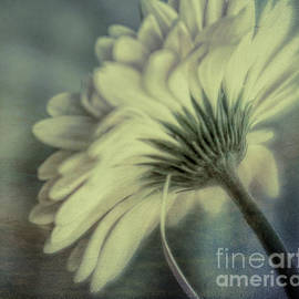 Remi D Photography - One Petal at a time