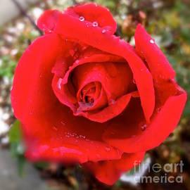Wonju H - One red rose