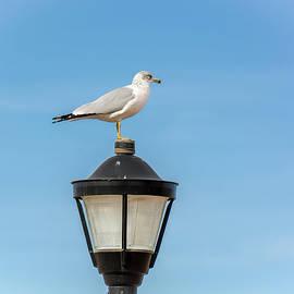 John Bartelt - One Seagull