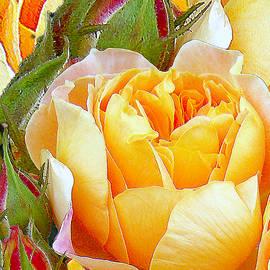 Michele  Avanti - One Yellow Rose