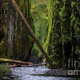 Bob Christopher - Oneonta Gorge Oregon 2